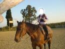 I love horses <3