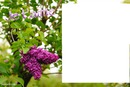lilas nature laly