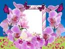 Cc Orquídeas y mariposas