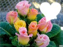 Des Roses pour te dire je t'aime MAMAN