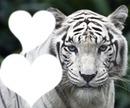Mon tigrou
