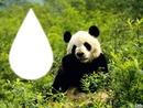 tros mignon le panda