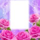 Rózsa kép