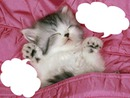 1 chaton qui dort 2 photos cadres
