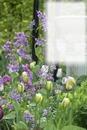 Jardin de fleurs & tulipes