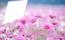Eu nas Flores
