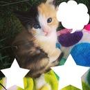 chaton bicolore 3 photos