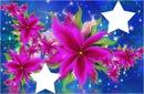fleurs rose fushia 2 photos