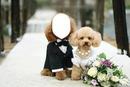 mariage caniche