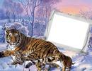 Zima,tygři,sníh