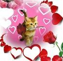 chat avec une rose dans sa gueule et des coeurs  4 photos