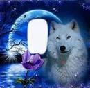 Cc Lobo de la noche