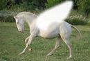 Un pégase blanc
