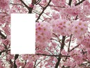 printemps bis