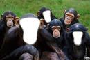Bande de macaques