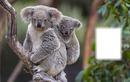 """""""koala"""""""