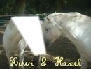 Visage de poney