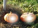 herfst - halloween