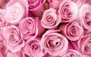 l'amour sous une rose