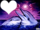 dauphin couche soleil