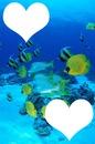 Paradis parmi les poissons