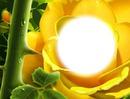 Rose jaune-épines