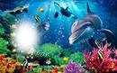 delfin a tengerben