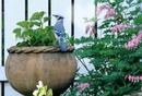 geai bleu dans les fleurs