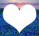 coeur champ fleur bleu