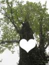 l'arbre de l'amour