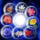 Cadres bulles de fleurs