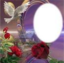 paloma y rosas