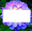 quadro na flor reluzente