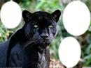 3 pic Black Panther