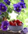 Cc flores y fresas