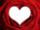 la rose au fond de notre coeur