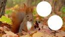 écureuil foret automne