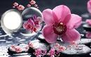 coeur orchidées
