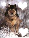 la course avec mon loup
