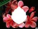 fleur de Fr