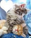 2 chatons avec 1 coeur cadre