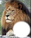 tu rey de jungla