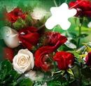 flores rojiblancas