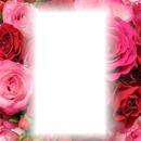 Roses profil