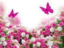 mariposas-roras