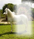 caballo de guardatinajas2