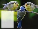 Oiseaux - nature - les autres