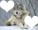best friend wolf