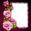Rosen für die Liebe