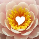 coração na flor